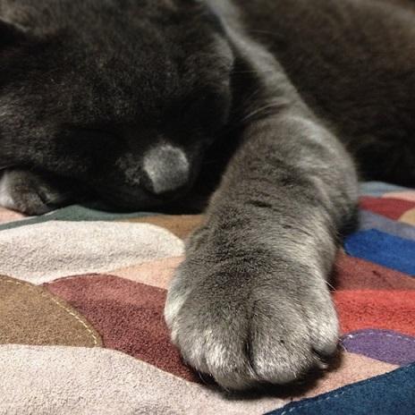 kotowaza-nekonote
